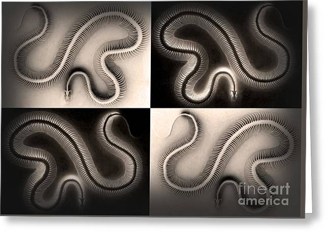 Snake Bones Greeting Card by Gregory Dyer