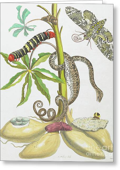 Snake, Caterpillar, Butterfly, And Insects On Plant Greeting Card