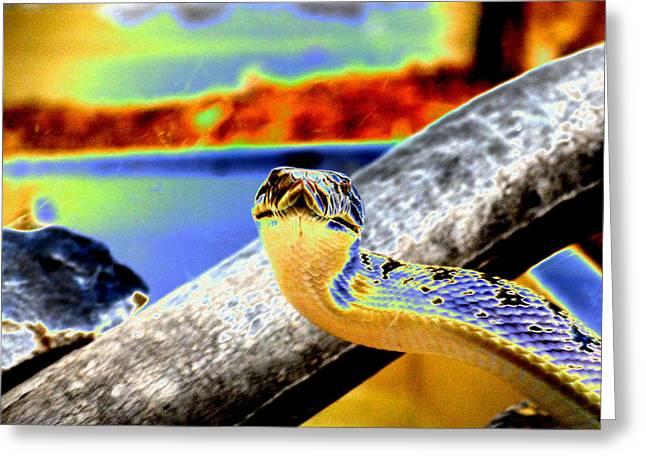 Snake Eyes Greeting Card by Peter  McIntosh