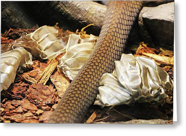 Snake Skin Greeting Card