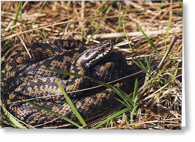 Snake Spring Greeting Card