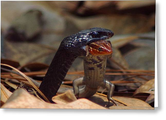 Snake With Meal Greeting Card