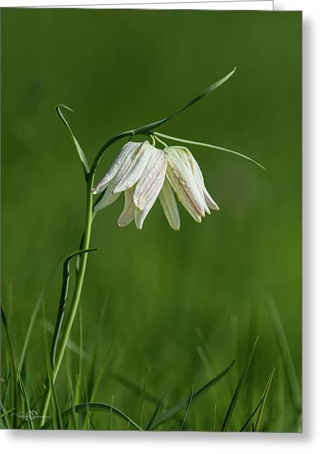 Snake's Head With Two White Bells Greeting Card