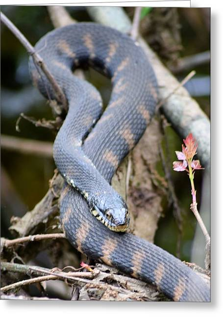 Snakes In The Trees Greeting Card