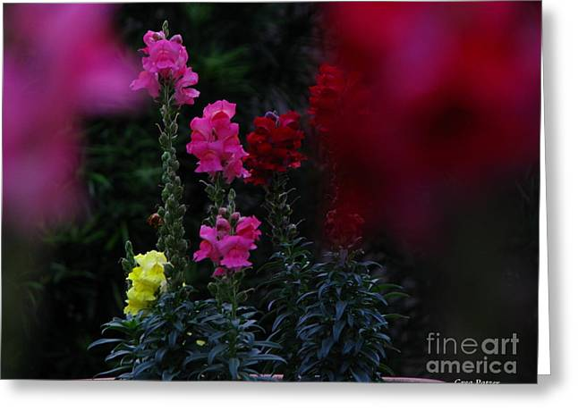 Snapdragon Greeting Card by Greg Patzer