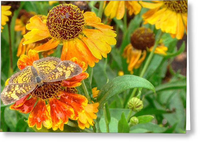 Sneezeweed Greeting Card by Shelley Neff