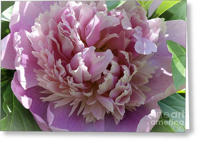 Snickerhaus Peony Greeting Card by Christine Belt