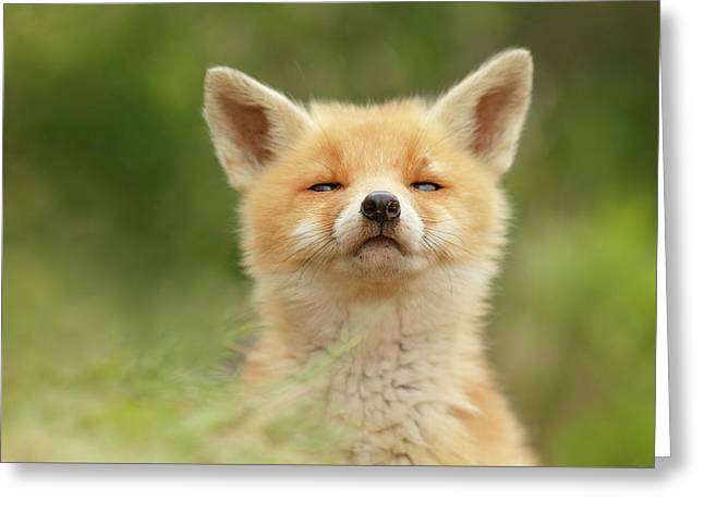 Sniffin'- Red Fox Smelling Some Fresh Air Greeting Card by Roeselien Raimond