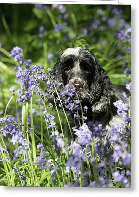 Sniffing Bluebells Greeting Card