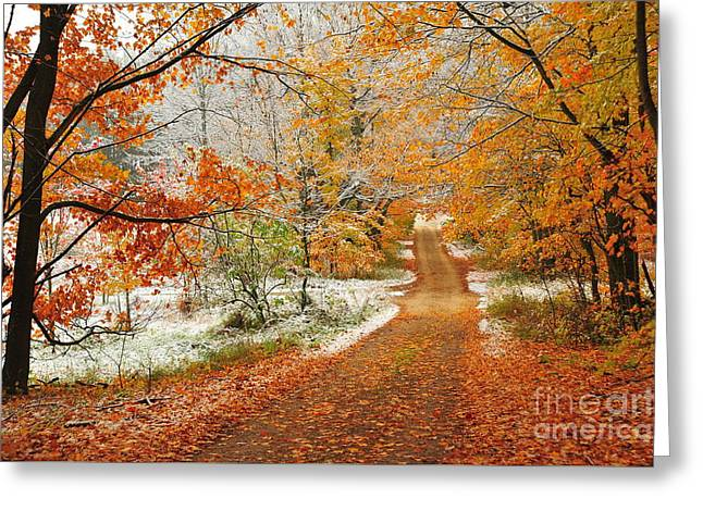 Snow Along Autumn Tree Tunnel Greeting Card