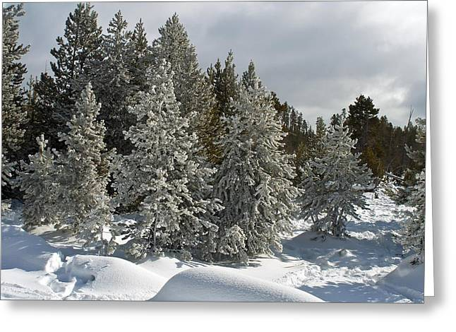 Snow And Ice Covered Evergreens At Sunset Lake  Greeting Card