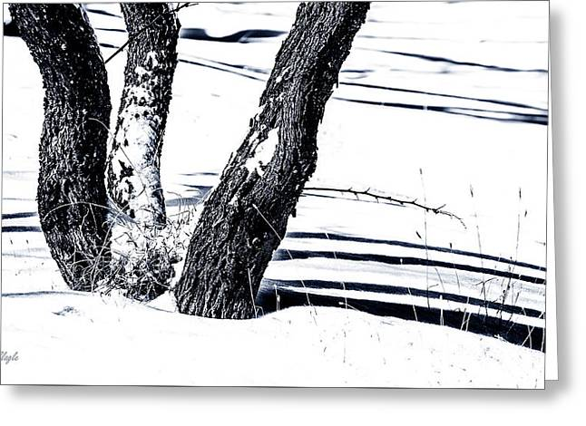 Snow And Shadows Greeting Card by Karen Slagle
