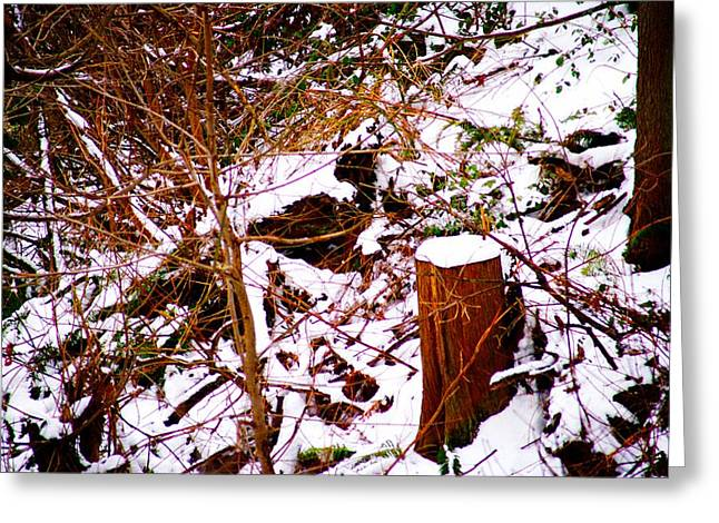 Snow And Tree Trunk Greeting Card by Paul Kloschinsky