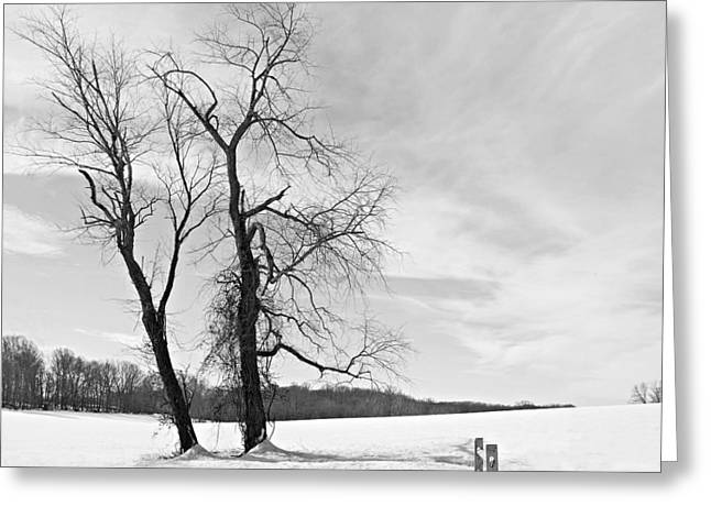 Snow And Trees Greeting Card