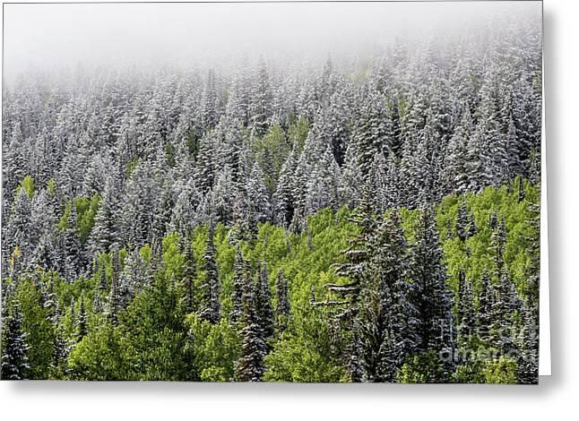Snow - Aspen - Pine - Winter Fog - Wasatch Mountains Greeting Card