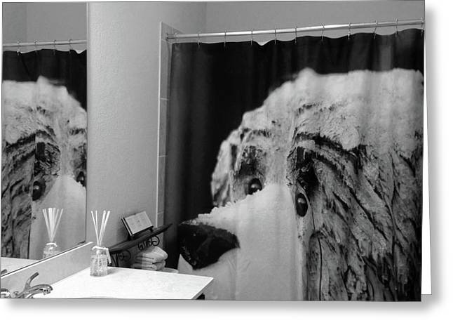 Snow Bear Reflection Bw Greeting Card by Connie Fox
