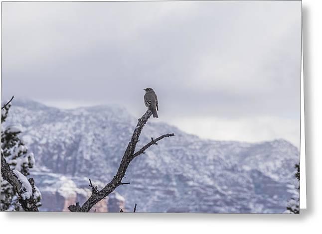 Greeting Card featuring the photograph Snow Bird by Laura Pratt