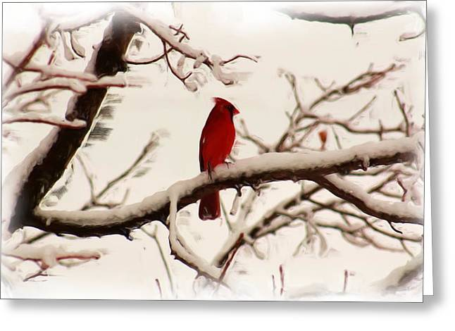 Snow Cardinal Greeting Card by Janet Pugh