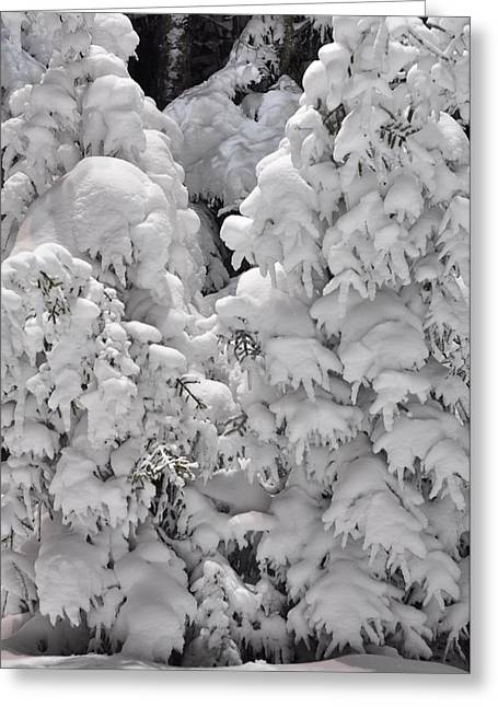 Greeting Card featuring the photograph Snow Coat by Alex Grichenko