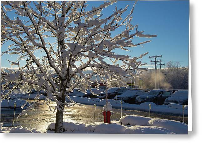 Snow-coated Tree Greeting Card