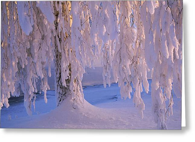 Snow Covered Birch Tree, Vuoksi River Greeting Card