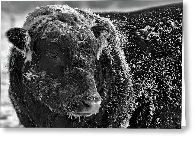 Snow Covered Ice Bull Greeting Card