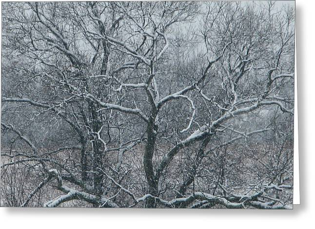 Snow Covered Greeting Card by Martie DAndrea