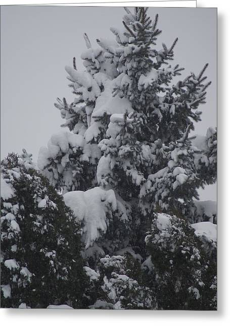 Snow Covered Pine Greeting Card by Heather Green