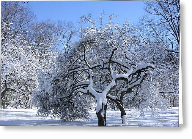 Greeting Card featuring the photograph Snow-covered Sunlit Apple Trees by Byron Varvarigos