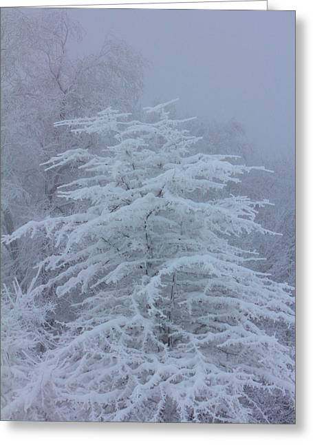 Snow Covered Tree In The Fog Greeting Card