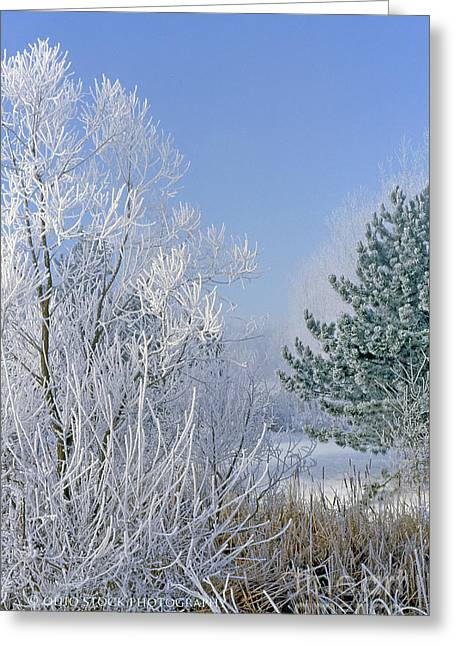 2a357 Snow Covered Trees At Alum Creek State Park Greeting Card