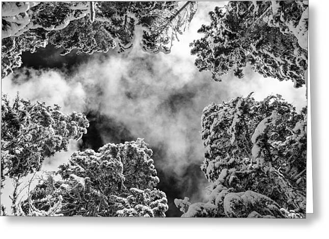 Snow Covered Trees Black And White Greeting Card by Pelo Blanco Photo