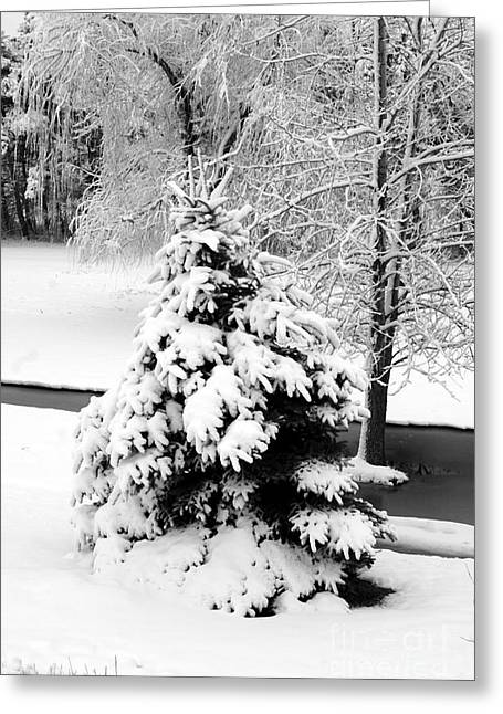 Snow Covered Trees Greeting Card by Kathleen Struckle