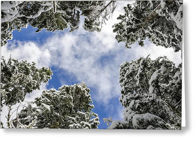 Snow Covered Trees Greeting Card by Pelo Blanco Photo