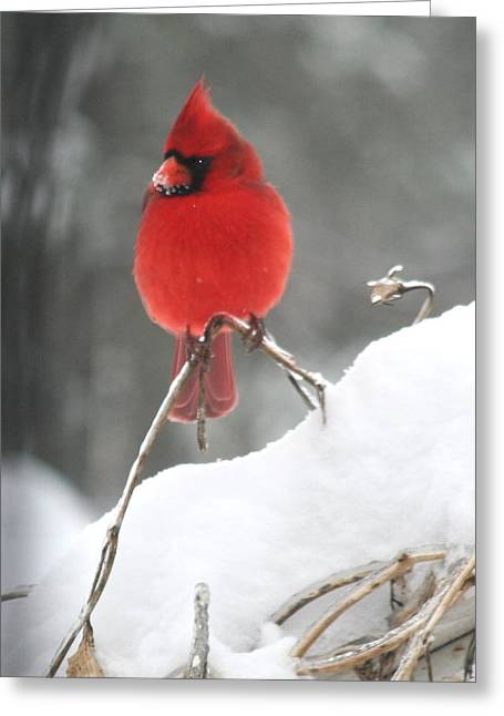 Greeting Card featuring the photograph Snow Day by Diane Merkle