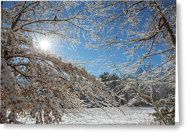 Snow Day Greeting Card by Jim Neal