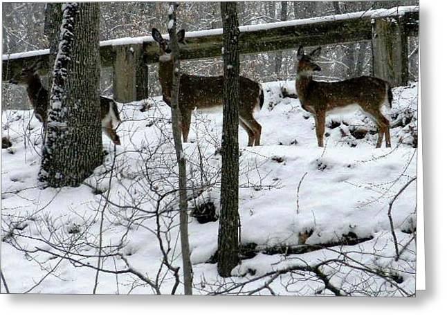 Snow Deer - Rock Creek Park Washington Dc Greeting Card