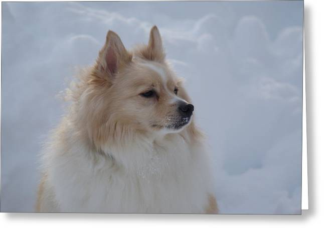 Snow Dog Greeting Card by Heather Green