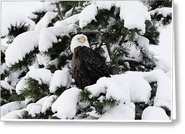 Snow Eagle Greeting Card
