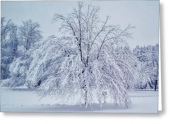Snow Encrusted Tree Greeting Card