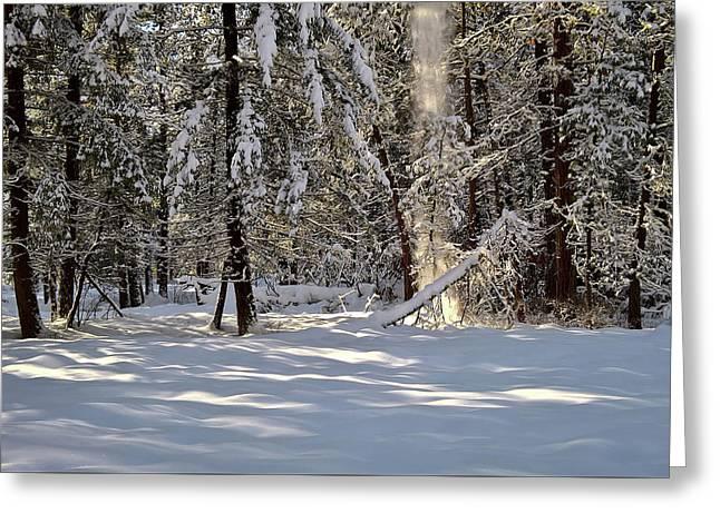 Snow Falling Off Cedars Greeting Card