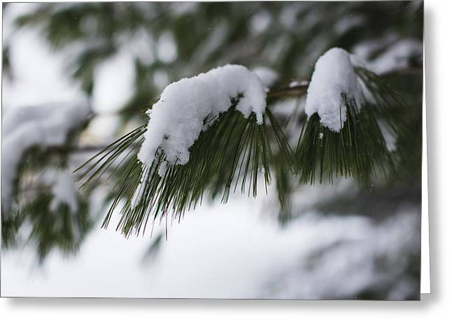 Greeting Card featuring the photograph Snow Falling On The White Pines by Andrew Pacheco