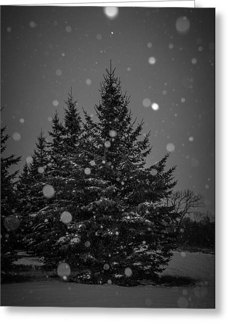 Snow Flakes Greeting Card by Annette Berglund