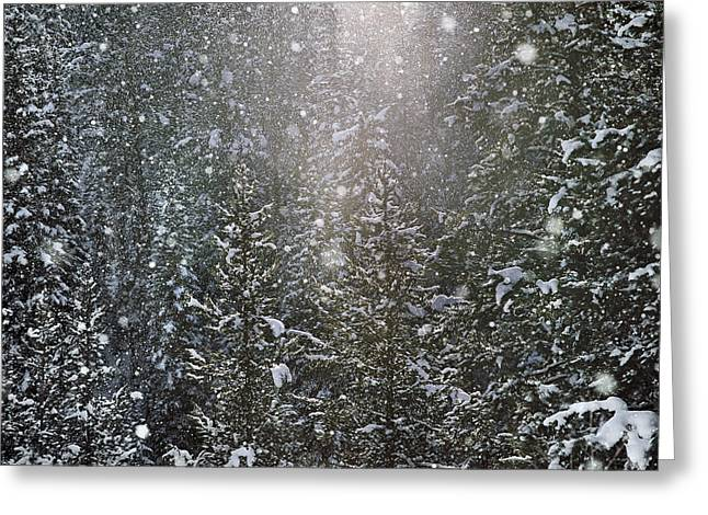 Snow Flakes Greeting Card by Leland D Howard