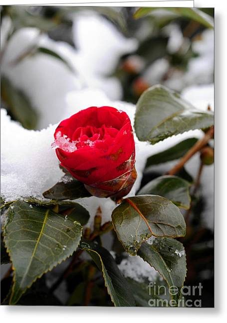 Snow Flower Greeting Card by Maureen Norcross