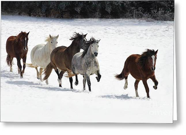 Snow Gallop Greeting Card