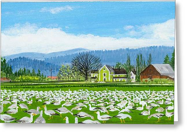 Snow Geese And A Farm House Greeting Card by Bob Patterson