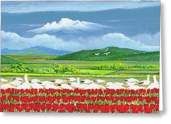 Snow Geese And Tulips Greeting Card by Bob Patterson