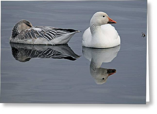 Snow Geese At Bosque Greeting Card