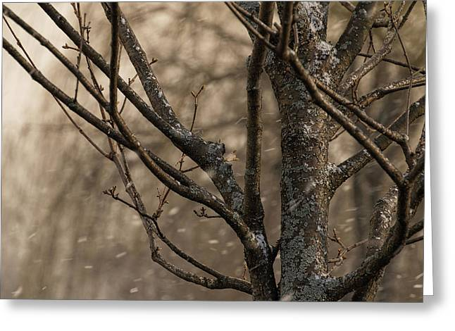 Snow In The Air - Greeting Card